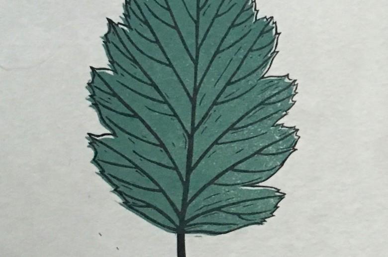 Leaf Lino Print   Draw Cut Ink Press